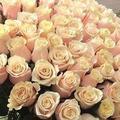 Продам розы от 51 штуки